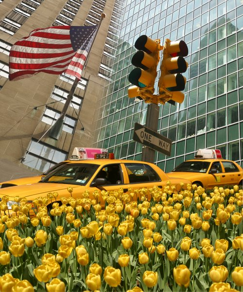alo_New York light YeloowTulip_10277_60x50cm